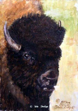 """Buffalo"" ""Buffalo"" - Original Sold  Wildlife Paintings  Wild Things Art"