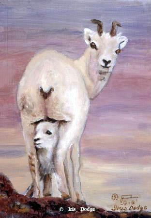 """Dall"" ""Dall""  Wildlife Paintings  Wild Things Art"