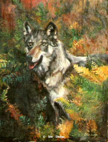 """Lone Wolf""<br> <font size=2> (50 S/N Limited Edition Prints)</font> ""Lone Wolf""  Wildlife Paintings  Wild Things Art"