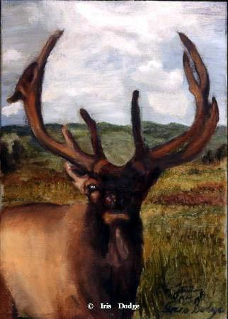 """""""Royal Elk"""" """"Royal Elk""""  Wildlife Paintings  Wild Things Art"""