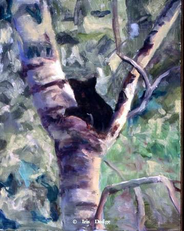 """Treed Cub"" ""Treed Cub""  Wildlife Paintings  Wild Things Art"