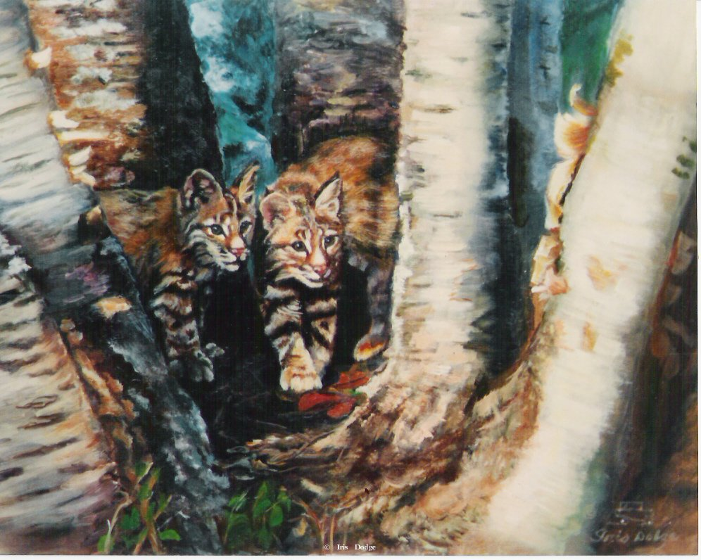 """Two of a Kind"" <br> <font size=2> (100 S/N Limited Edition Prints)</font> ""Two of a Kind"" -  Original Sold  Wildlife Paintings  Wild Things Art"